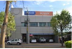 Aster Monterrey Centro
