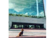 Foto UDG - Universidad de Guadalajara - Sede Guadalajara Guadalajara Jalisco